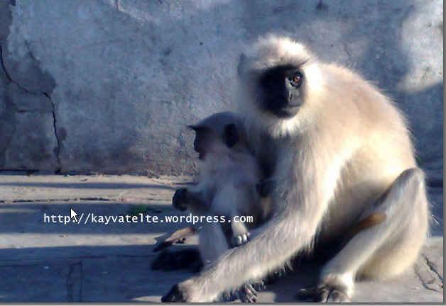 6 monkey